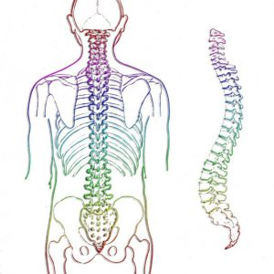 Why Is Spinal Health Important?