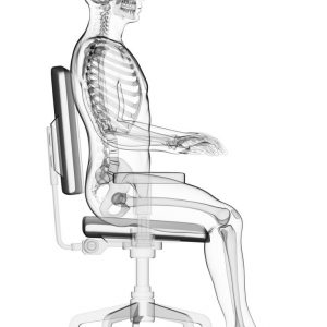 Ergonomic Office Chairs - What To Look For